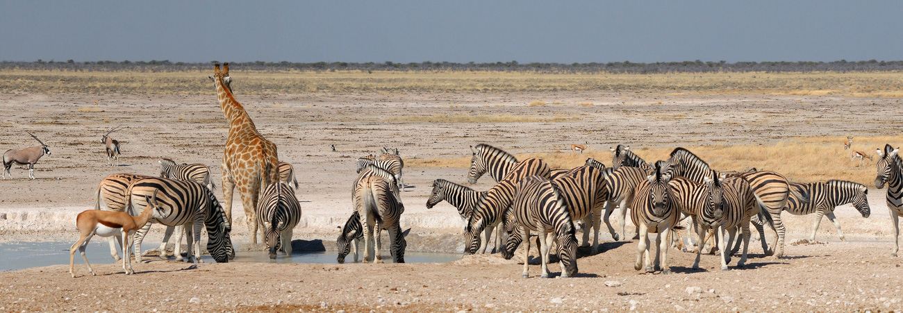Located at Etosha National Park, Namibia